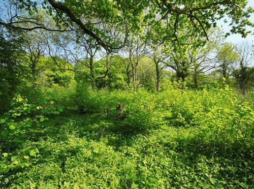 Honeypot Wood  Norfolk Wildlife Trust