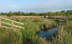 Thorpe Marshes: A refuge in lockdown