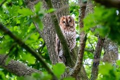 Norwich Nature Notes – June