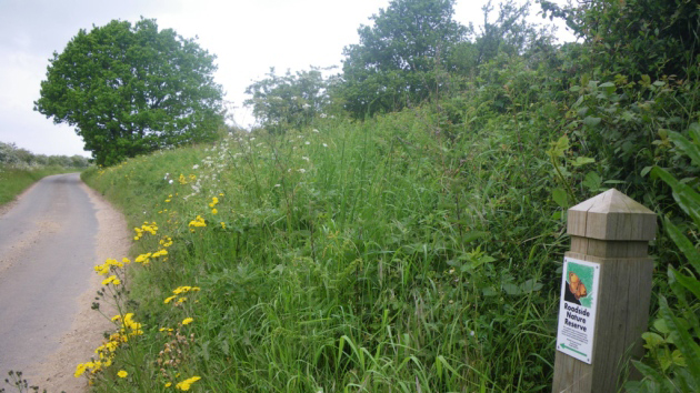 Balance of safety and nature is driving verge cutting plans