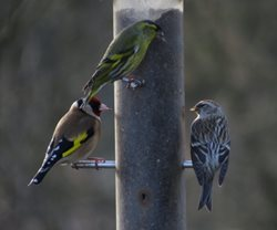 Should I feed birds in my garden all year round?