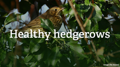 Conservation partnership to create Healthy Hedgerows