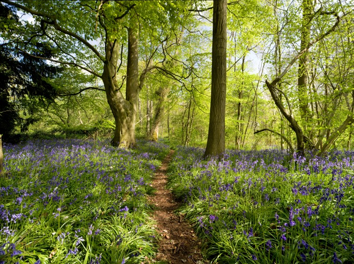 North Norfolk Woods Living Landscape, photo by Richard Osbourne