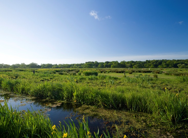 Thorpe Marshes by Richard Osbourne