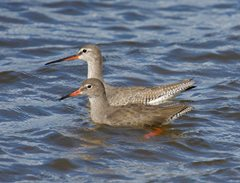 2019-07-27 Identifying Waders