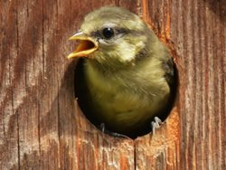 Should I clean out a bird box?