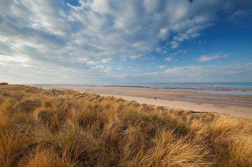 Image result for holme dunes nature reserve