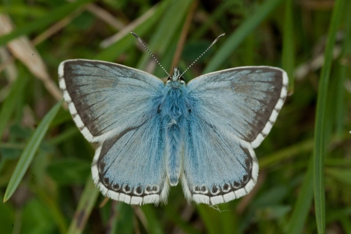 2019-05-23 Butterflies of Norfolk