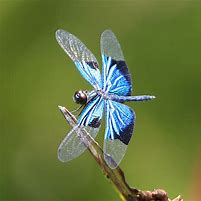 Dragonflies | Dragonflies are some of the most colourful and charismatic insects found in the UK and form a fascinating subject for study.   | National Trust Felbrigg