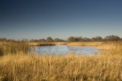 Hickling Broad and Marshes
