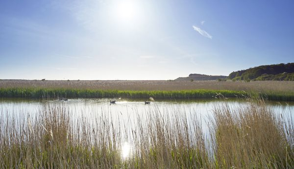 Songs, Scales and studies at Cley this summer
