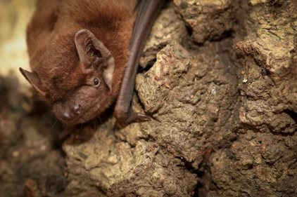 Protected Species Survey: Bats