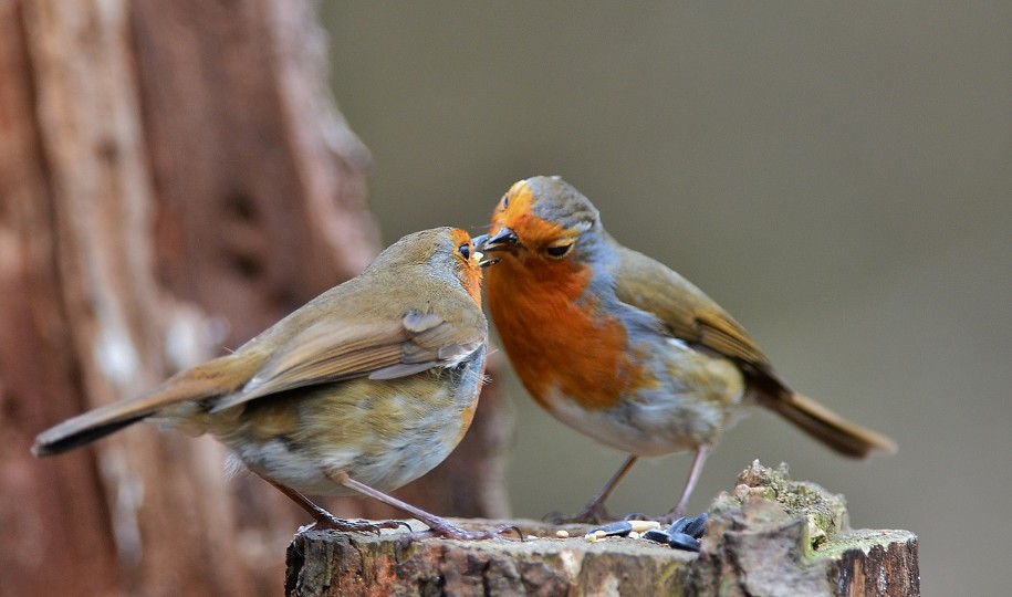 Robin, photo by Liz Dack