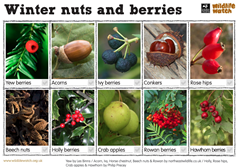Nuts and berries spotter