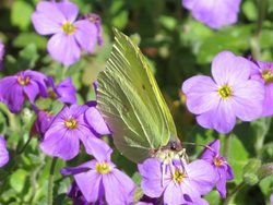 What are the best plants to grow to attract butterflies to my garden?