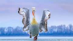 2019-09-25 International Bird Photographe