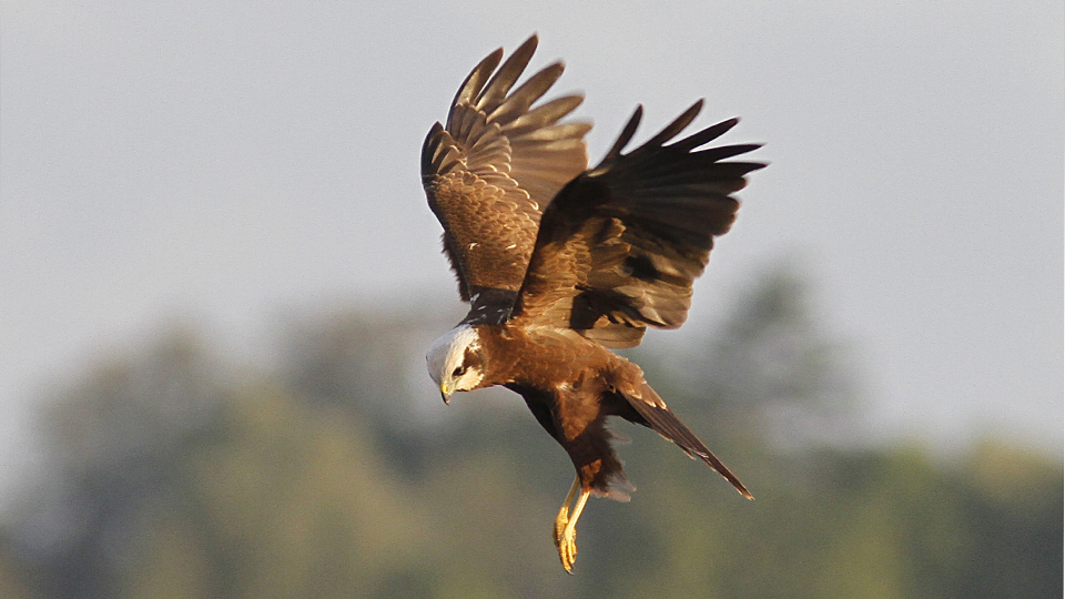 Raptor Roost experience at Hickling Broad