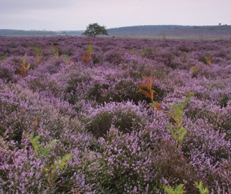NWT Roydon Common in the Gaywood Valley. Photo by Lewis Phillips
