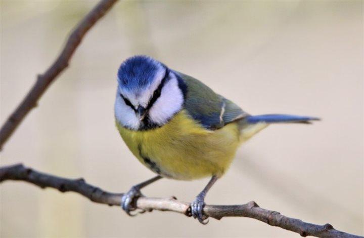 2018 04 28 garden birds song and calls norfolk wildlife. Black Bedroom Furniture Sets. Home Design Ideas