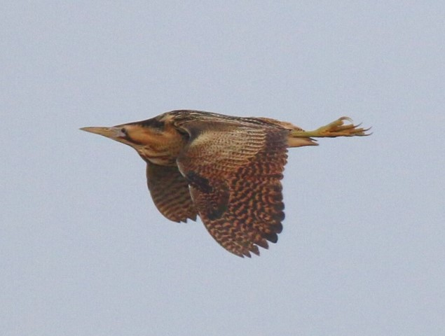 2019-04-07 Boom of the Bittern Walk