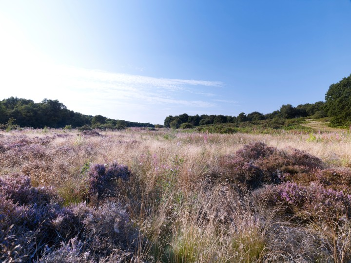 NWT Syderstone Common