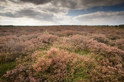 NWT Roydon Common, photo by Richard Osbourne