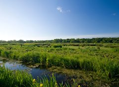 2020-06-11 Thorpe Marshes Guided Walk CAN